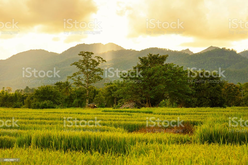 The Central Valley stock photo