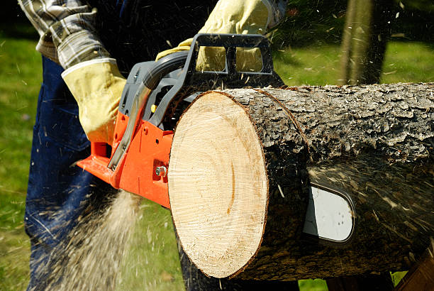 the chainsaw - chainsaw stock photos and pictures