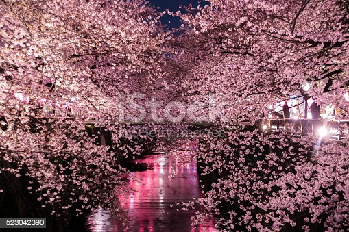 istock The cherry blossoms Special light up in Tokyo. 523042390