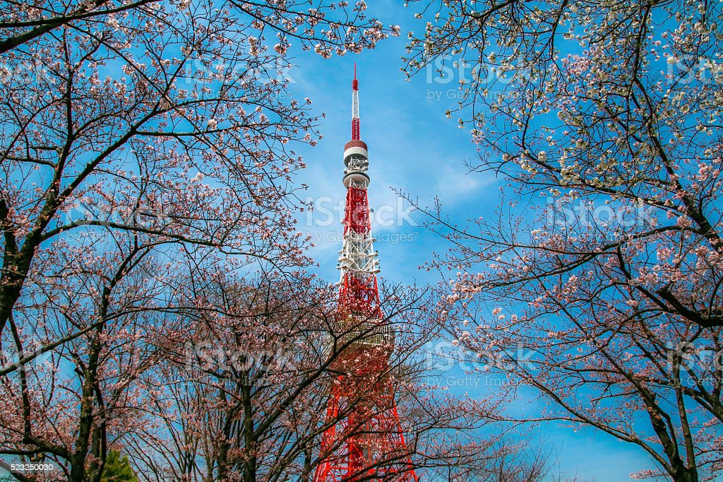 The cherry blossoms with Tokyo tower. stock photo