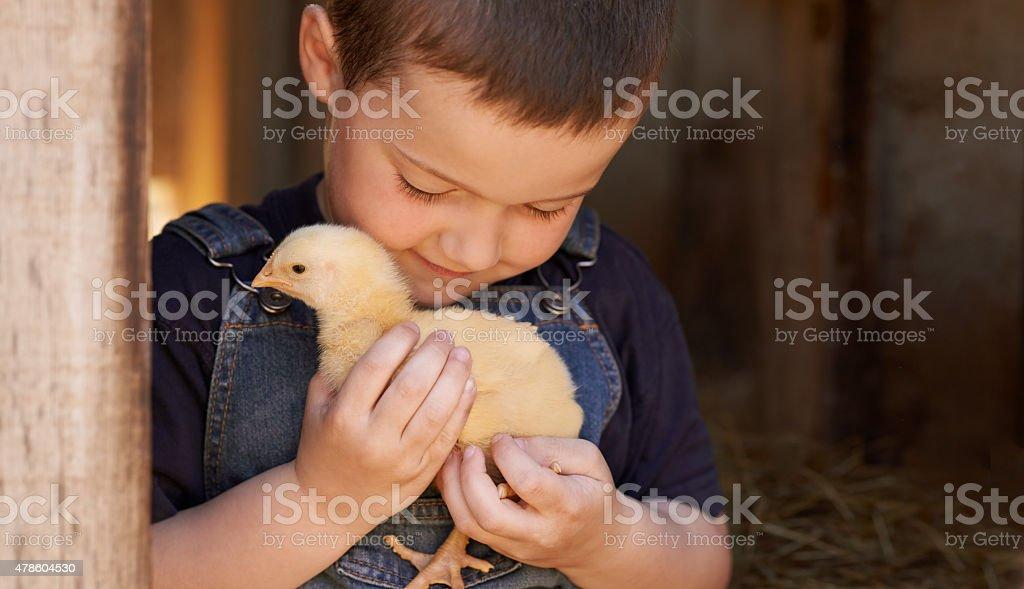 The chick whisperer stock photo