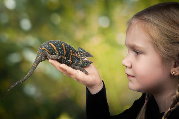 The child holds a bright hissing chameleon. Background nature stock photo