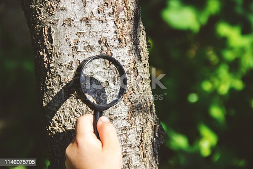 istock The child is looking in a magnifying glass. Increase. selective focus. 1146075705