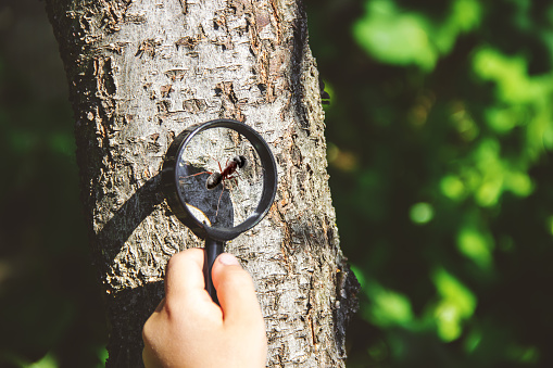 istock The child is looking in a magnifying glass. Increase. selective focus. 1146075711