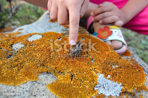 the child shows a grasshopper on a stone