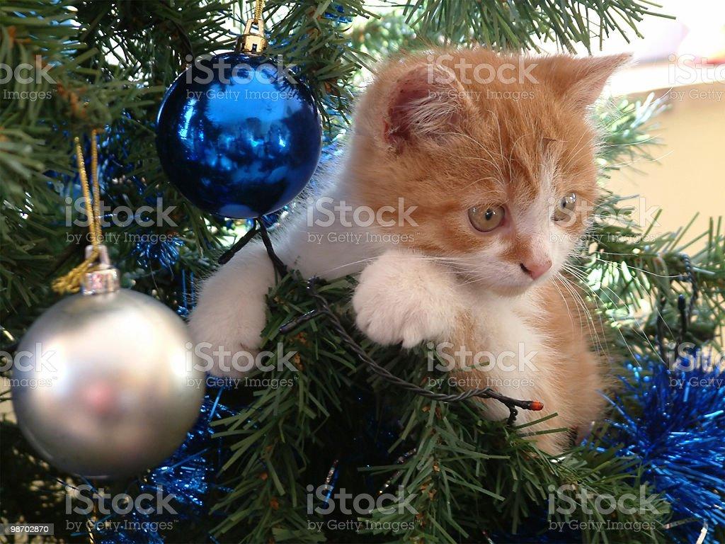 The christmas kitten royalty-free stock photo