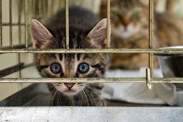 The citten looking from the cage The citten looking from the cage sheltering stock pictures, royalty-free photos & images