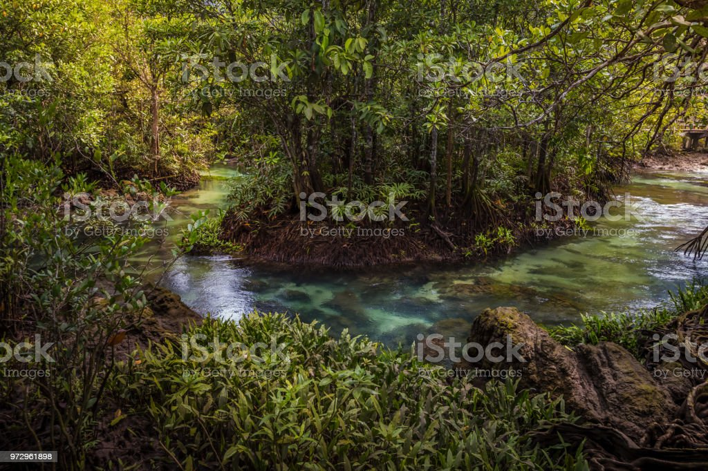 The clear green stream flows through the mangrove forest root. 'nIn the midst of the shady and beautiful nature. Close up. Tha Pom Klong Song Nam beautiful and famous tourist destination in Krabi, Thailand. stock photo