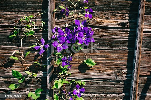 Bavaria, Germany, Agriculture, Ancient, vintage, wood, craft, obsolete, hut, Clematis