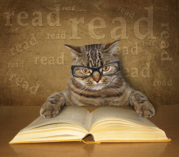 The clever cat with glasses reads a book picture id640333350?b=1&k=6&m=640333350&s=612x612&w=0&h=c4parxtk0lotsyxawjojn36fcyxupnovpy3tlsf9o18=