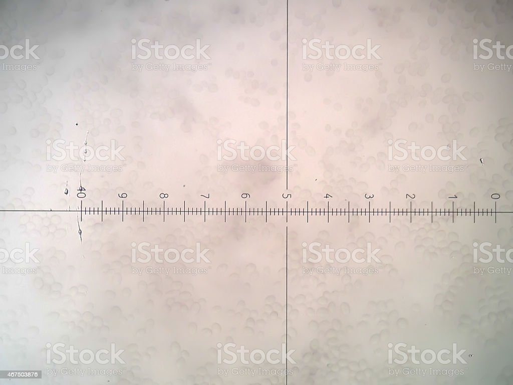 The close-up of a porous white surface stock photo