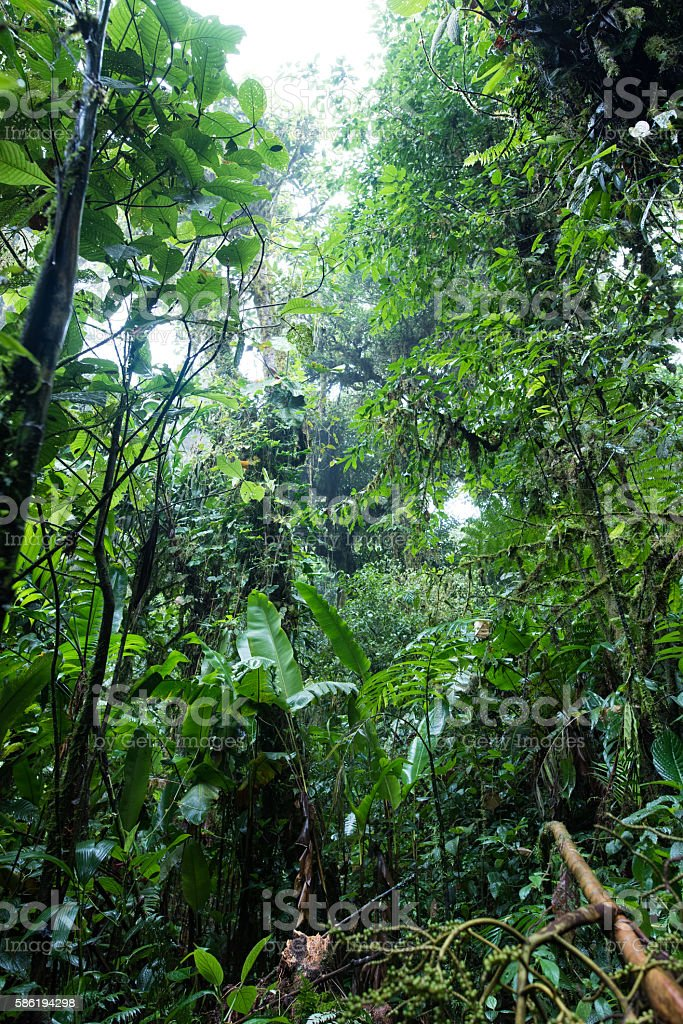 The cloud forest of Costa Rica stock photo