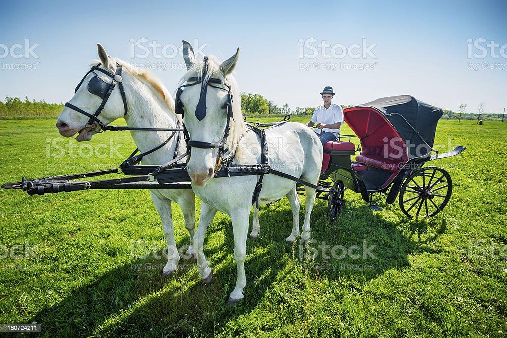 The coachman royalty-free stock photo