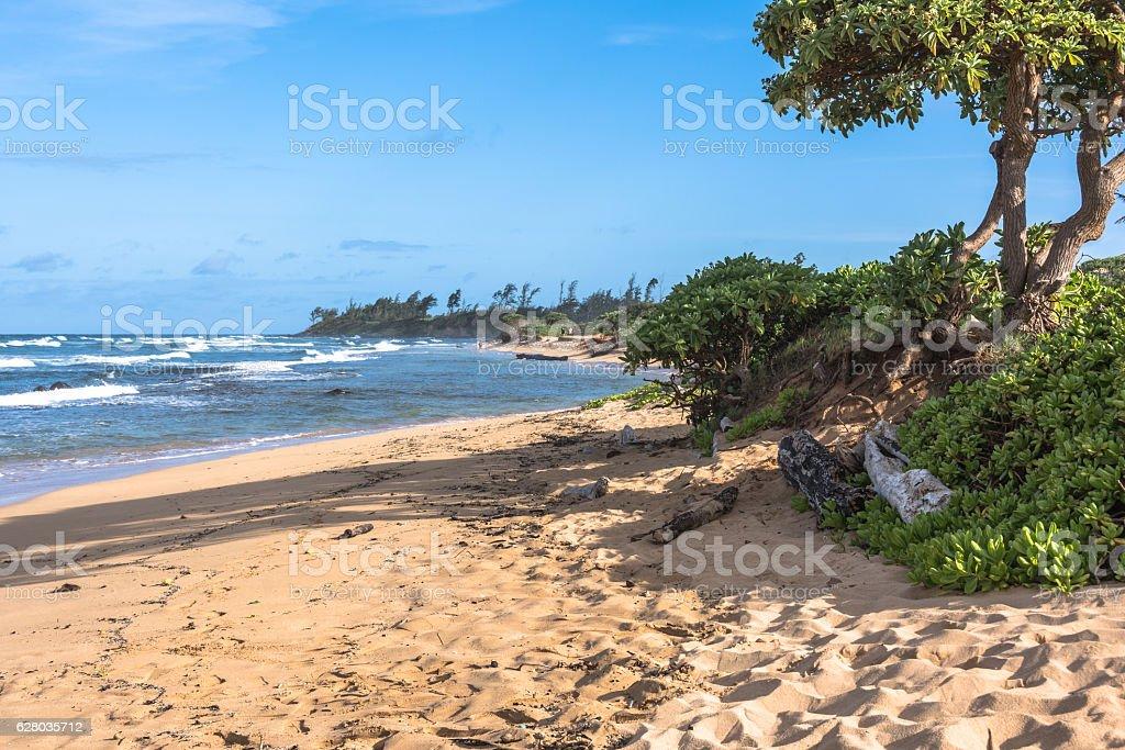 The coast along Lihue, Kauai, Hawaii stock photo