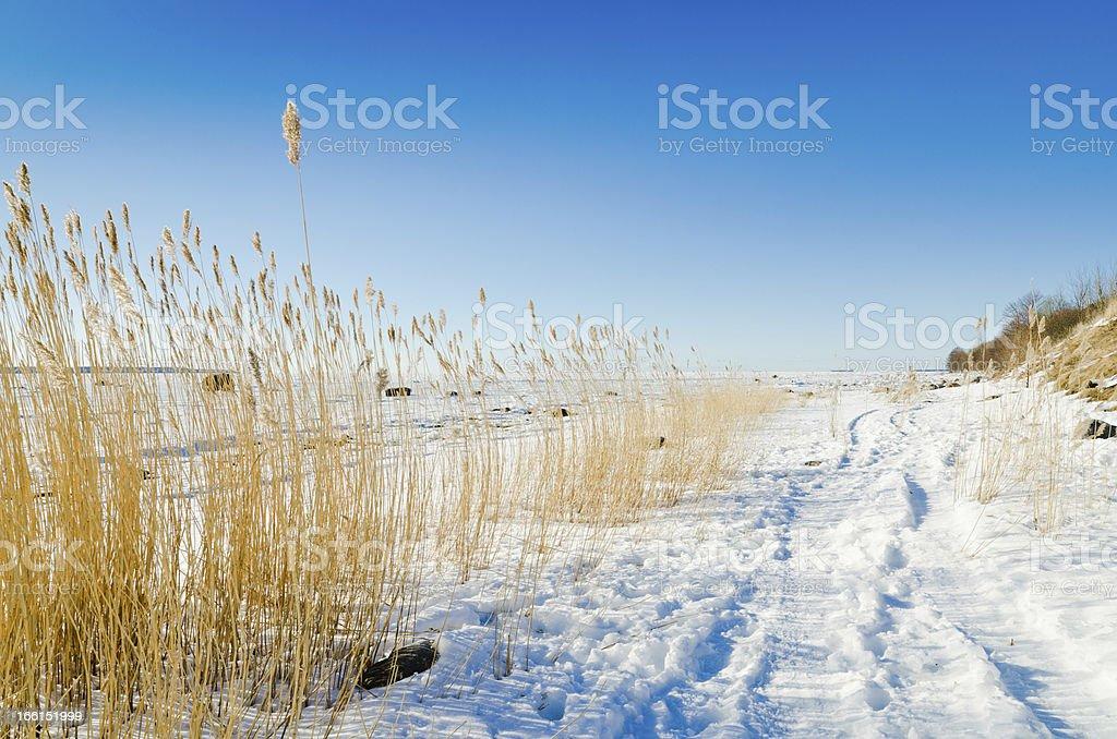 The coast of Baltic sea royalty-free stock photo