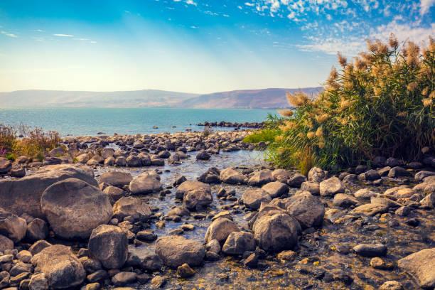 de kust van het meer van galilea in de buurt van ein eyov waterval in tabgha, israël - israël stockfoto's en -beelden