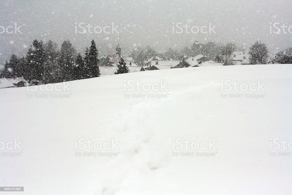 the cold winter stock photo