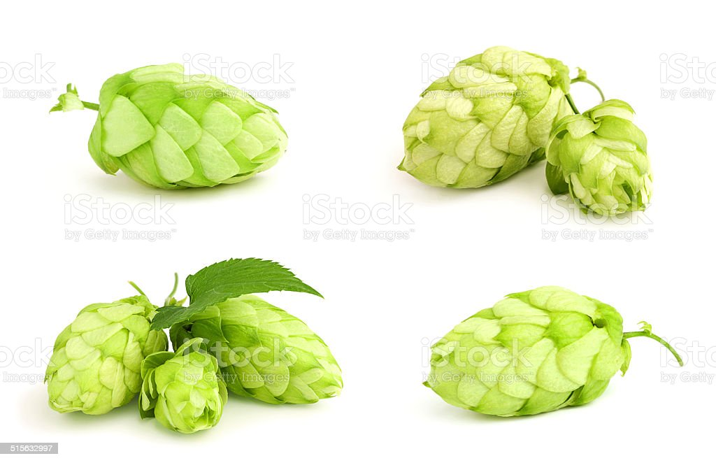 The collage fresh green hop. stock photo