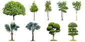The collection of trees, palm and bonsai tree isolated on white background. Beautiful and robust trees are growing in the forest, garden or park.