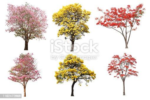 The collection set of isolated yellow, pink and red flower tree in spring and summer season