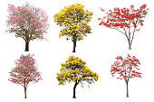 istock The collection set of isolated yellow, pink and red flower tree in spring and summer season for design purpose 1162472868