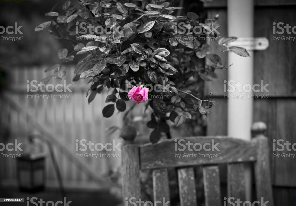 The Color of Spring stock photo