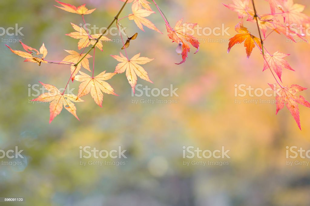 The color of the autumn royalty-free stock photo
