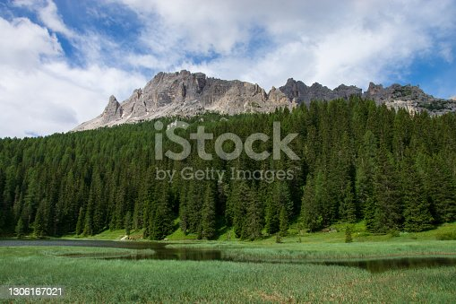 istock the color of the forests in spring 1306167021