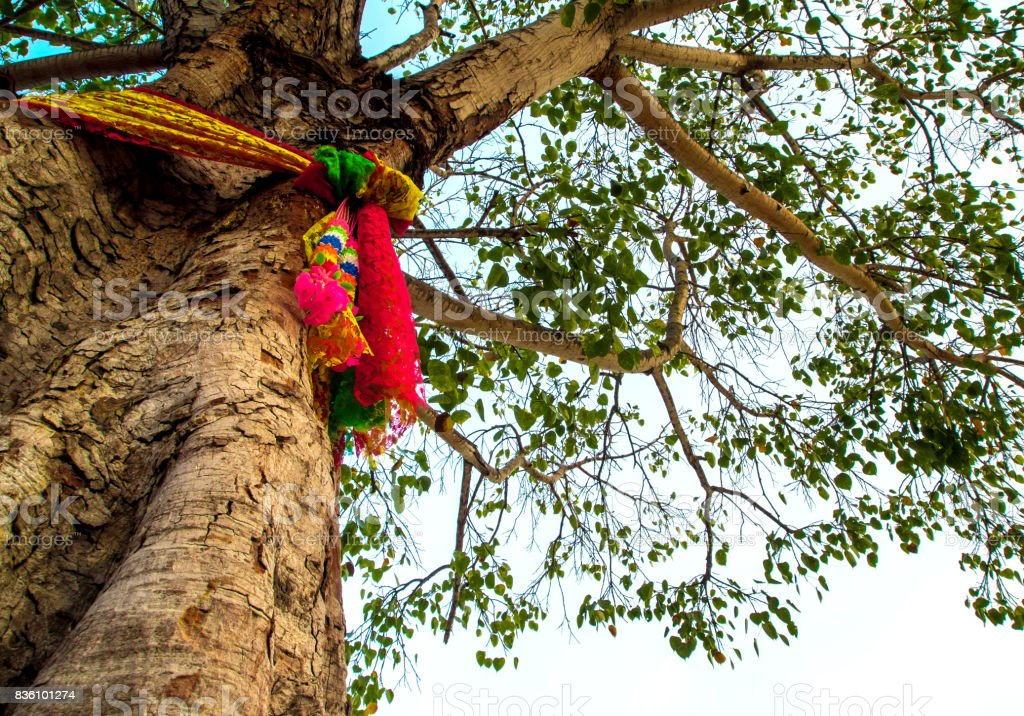 The colored ribbons at the holy bodhi tree stock photo