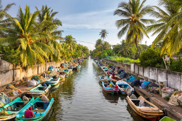 The colorful boats are docked along the banks of Hamilton's Canal in fishing village district of Negombo, Sri Lanka. stock photo