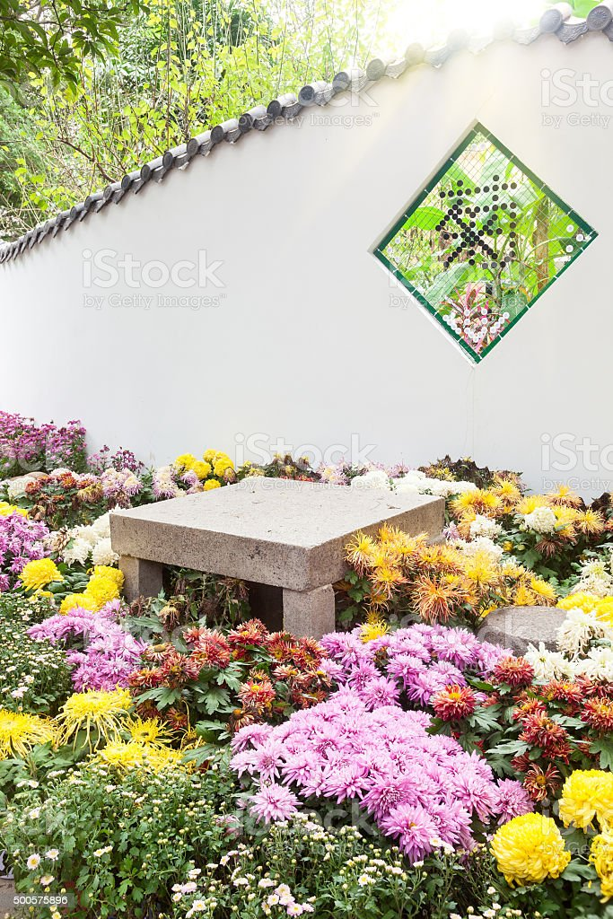 The Colorful chrysanthemums flowerbed in garden stock photo