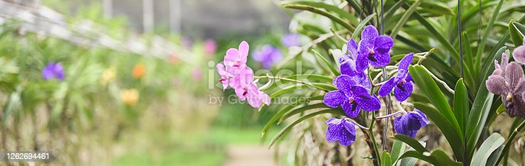The colorful orchid farm is an agricultural industry in Thailand.