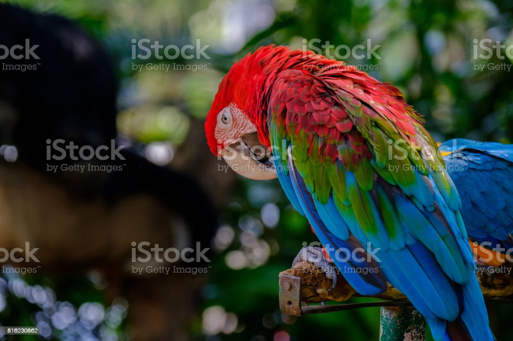 The colorful parrot. stock photo