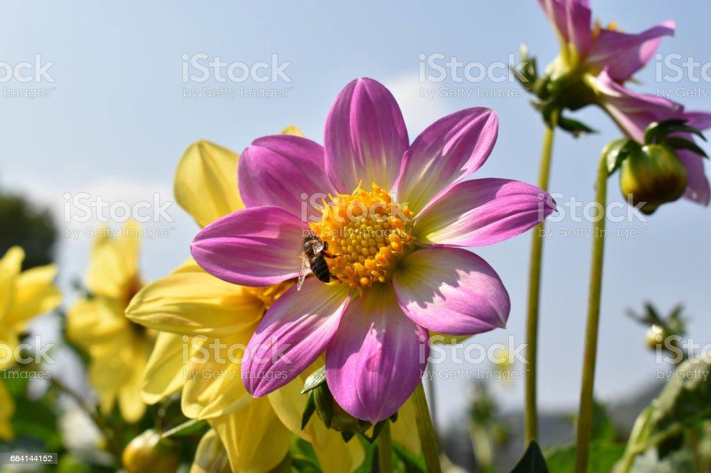 De kleurrijke wilde bloem royalty free stockfoto