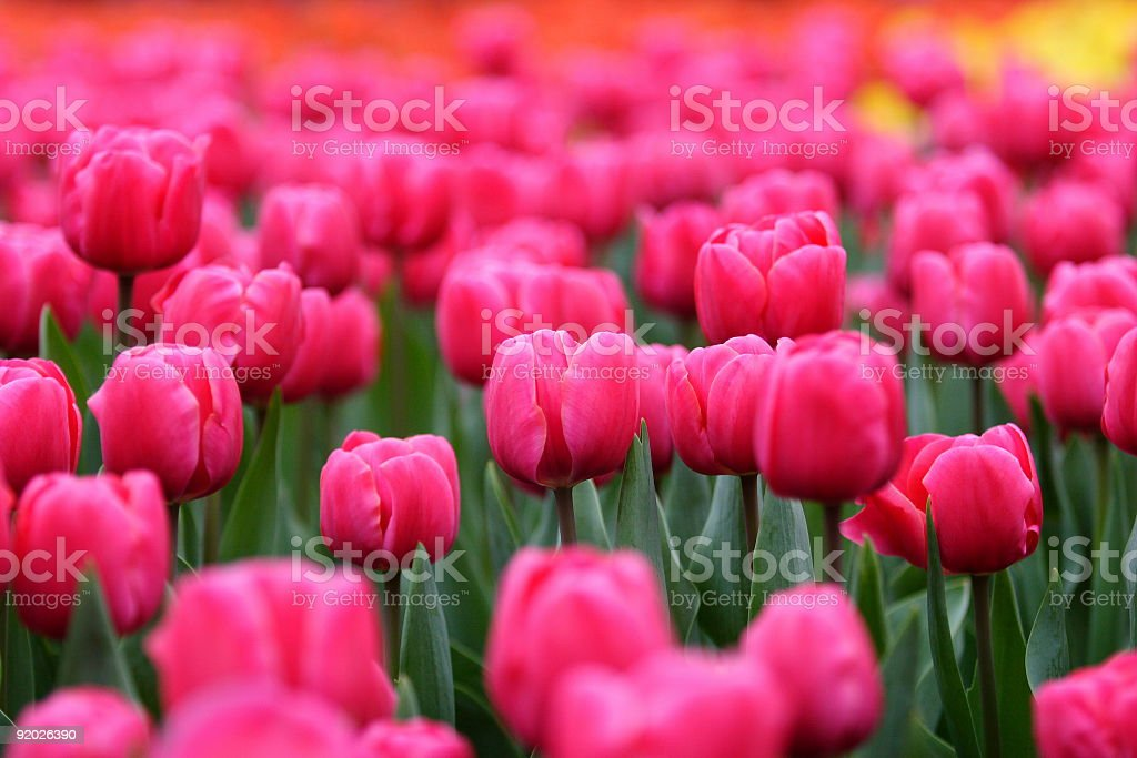 The colorful world royalty-free stock photo