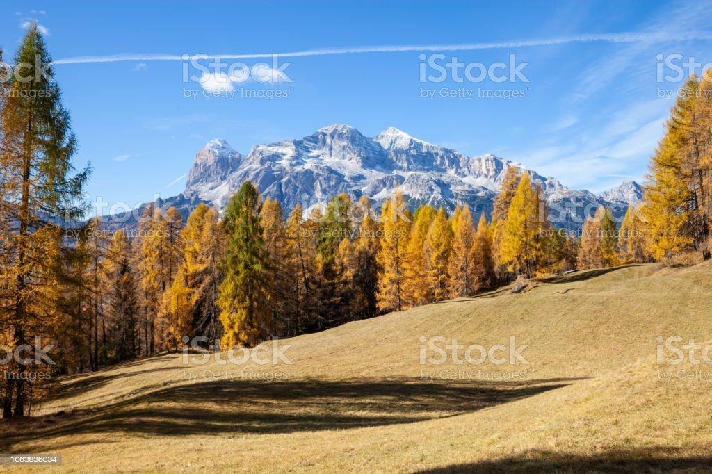 Los colores del otoño en un bosque de abeto, Val di Funes. Bolzano, Tirol del sur, Dolomitas, Italia. - foto de stock