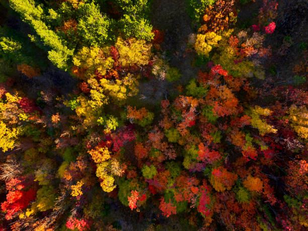 The colors of autumn! stock photo