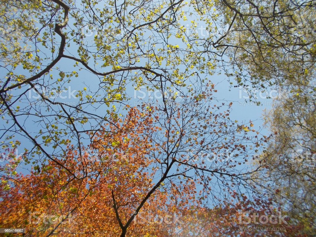 The colors of autumn zbiór zdjęć royalty-free