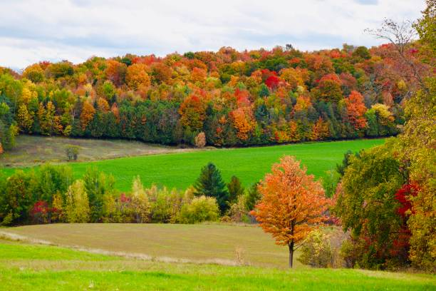 les couleurs d'automne - josianne toubeix photos et images de collection