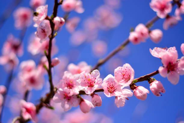 Die Farben des Frühlings – Foto