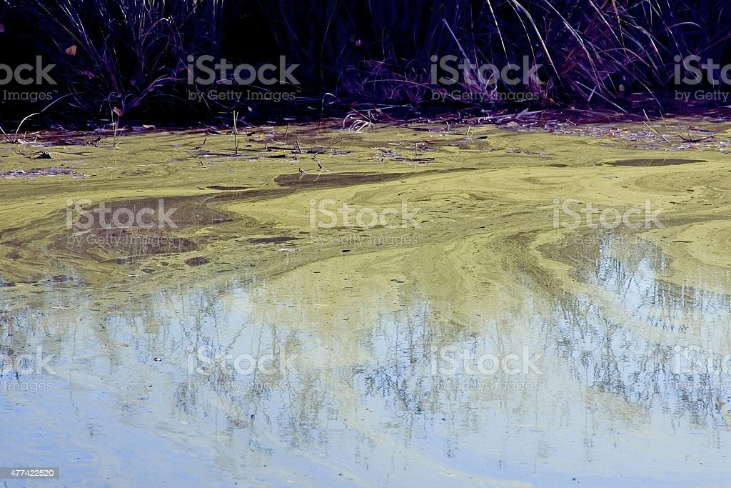 The colors of the pond stock photo