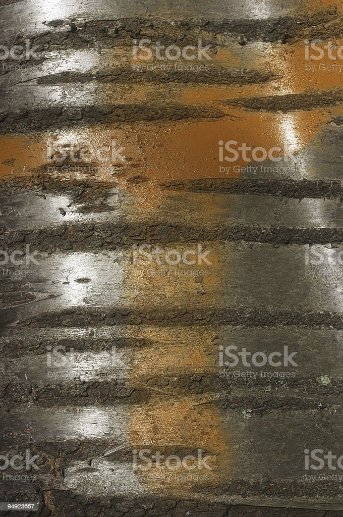 Tiger stripes on tree bark stock photo