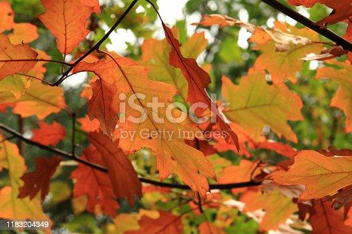 wunderschön farbige Blätter im Herbst