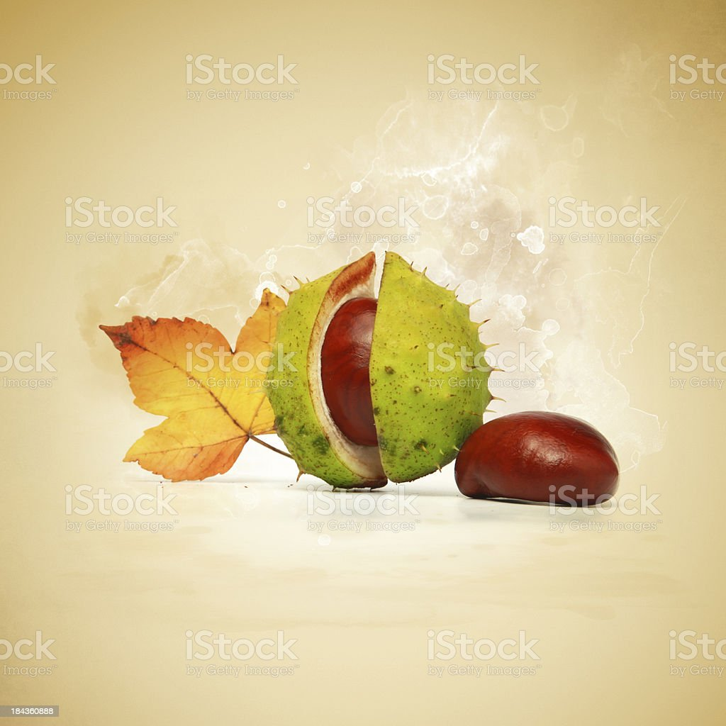 The colours of fall royalty-free stock photo