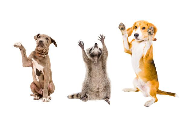 The company of cheerful animals stock photo