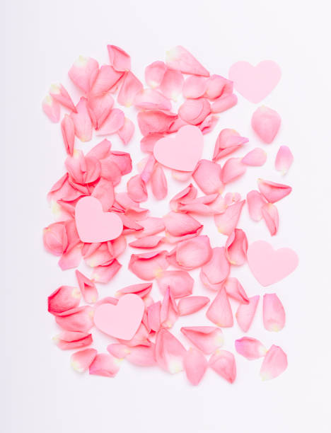 The composition of pink roses and hearts floral background for the picture id1094431322?b=1&k=6&m=1094431322&s=612x612&w=0&h=ev z3ynbic6p kwyfmsd mxandwn8faj3ouskh1kp1y=