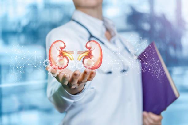 Das Konzept ist die Behandlung der inneren Organe in der modernen Medizin. – Foto