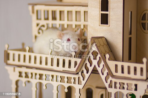 istock The concept of a fairy tale. A rat in the house. 1150559418