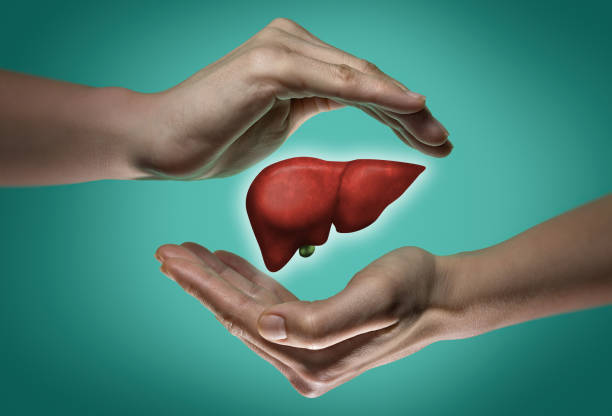 The concept of a healthy liver. stock photo