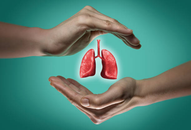 The concept of a healthy lungs. stock photo